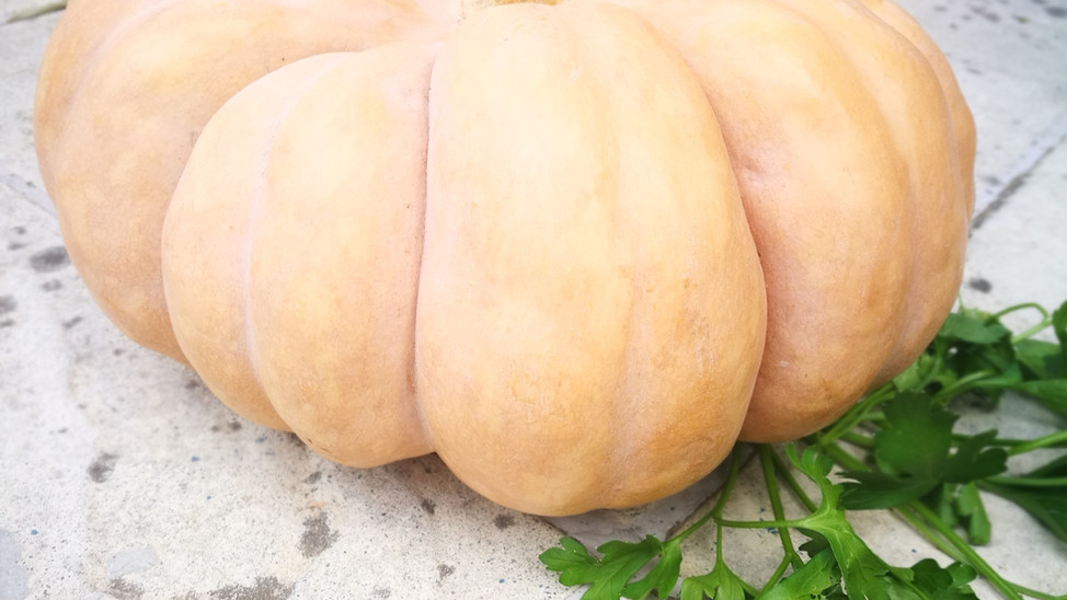 Vegetable of the Month - Pumpkin - October