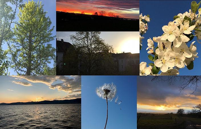 Collage_für_Website.jpg