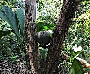 vallee de maie