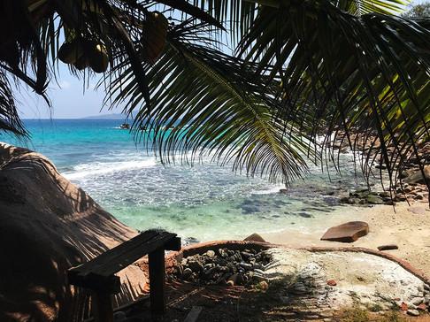 Coconut Services