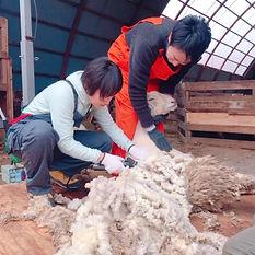 毛刈り体験.jpg