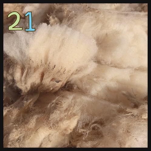 21 サウスダウンF1