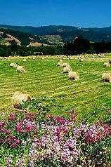 field with wildflowers along Elkshead Ro