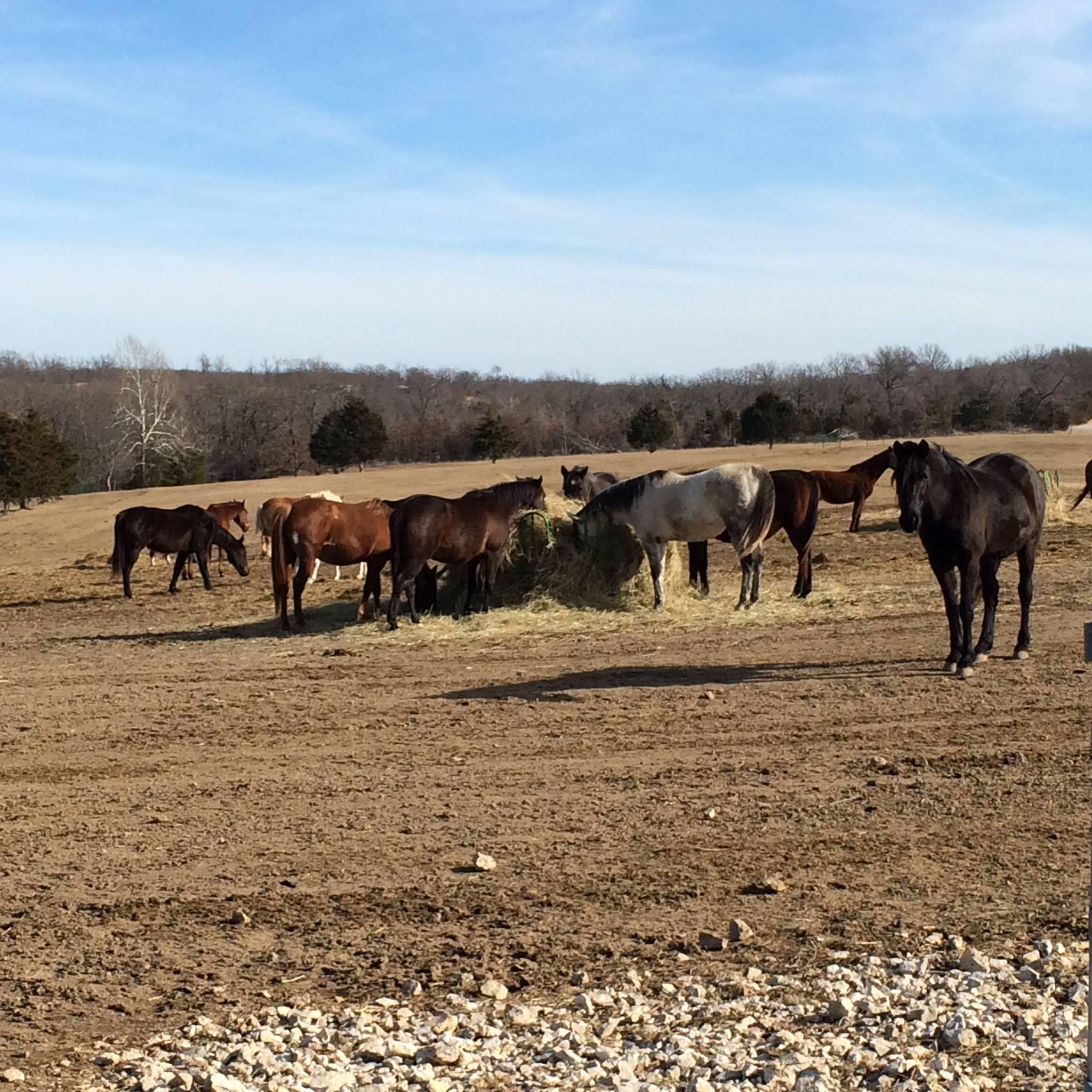 Horse rescue and sanctuary|Linn Creek, MO|Missouri Forget Me Not