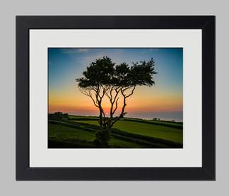 Tree Framed