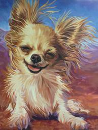 Chihuahua - Windy