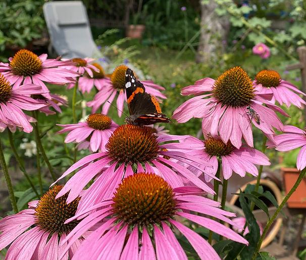 Im Else Workation Retreat gibt es einen großen bunten Garten