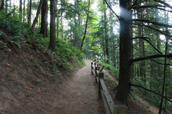 ForestParkWildwood