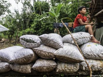 Em Roraima, indígenas Wai Wai conquistam mais autonomia para escoar castanhas