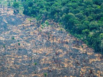 Destruição da Amazônia seria 'apocalipse' mundial, alerta líder indígena