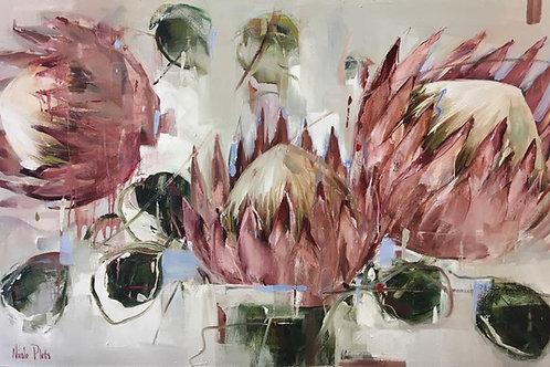 Nicole Pletts - Pink Proteas