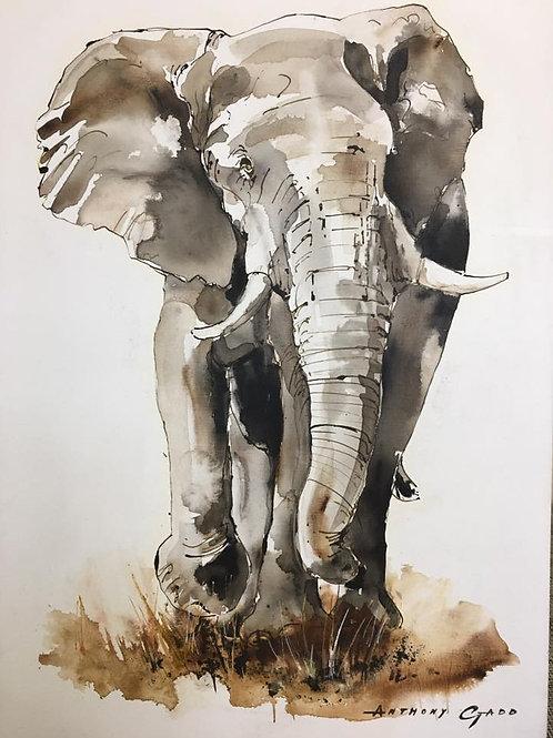Anthony Gadd - Elephant