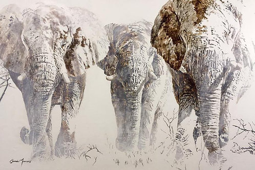 Ivory Kingdom
