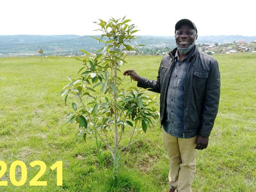 Carbon Neutral Scheme: An update on the trees planted in 2019