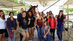 PreVeterinarian Clydesdale Clinicals