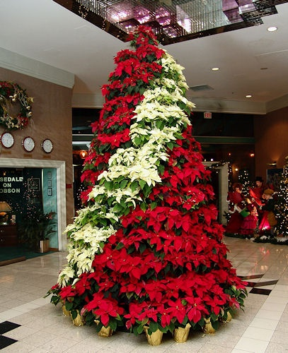 Poinsettia-Tree