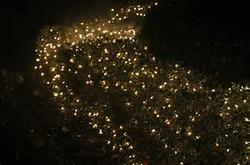 lit shrubs