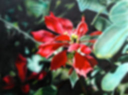 Poinsettia Revealed  30%22x40%22 acrylic