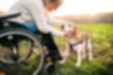 a-senior-woman-in-wheelchair-with-dog-in
