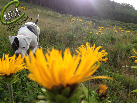 Wandering Through The Wildflowers