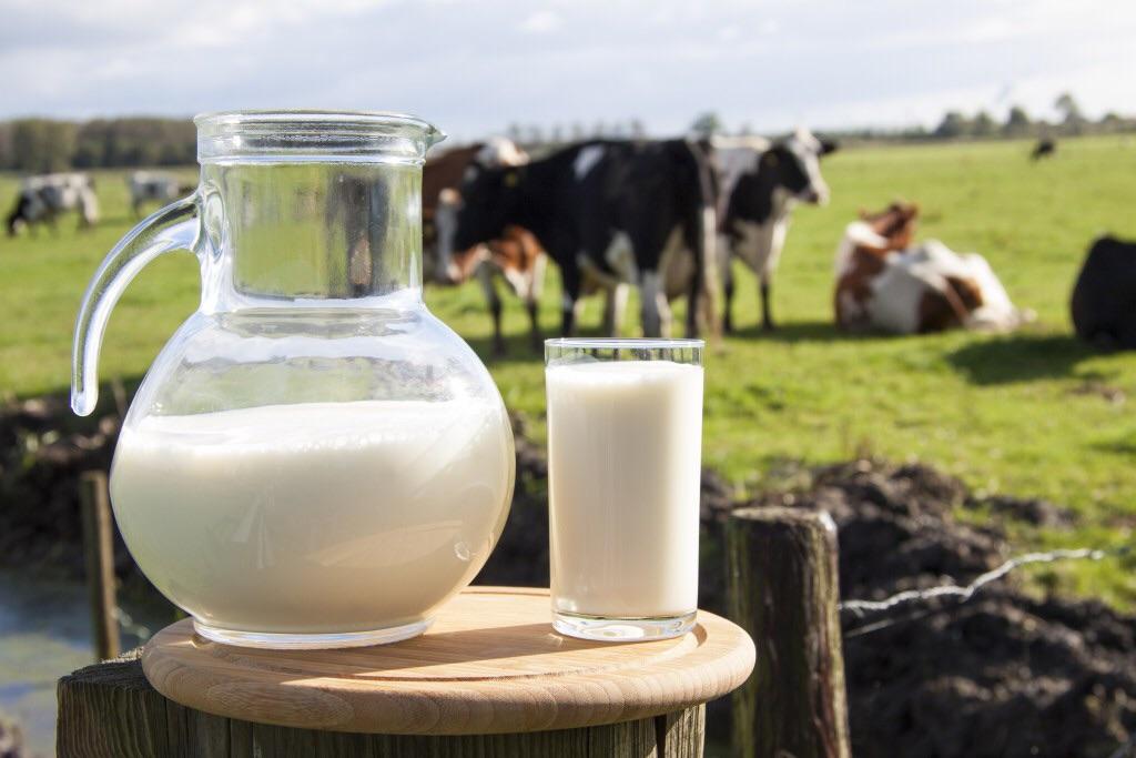 Молочно товарна ферма