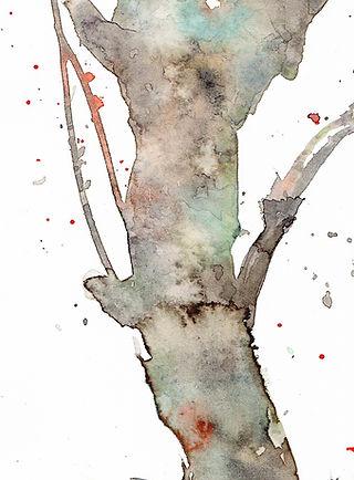 梅の古木、部分(水彩画)