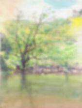 新緑の調べ(水彩画)