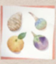 寿の菜(正月の野菜:里芋・慈姑・丸茄子・蜜柑)水彩画 福井良佑 作