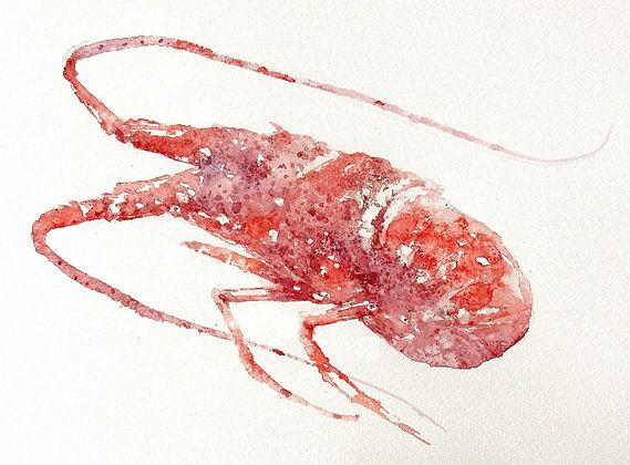 伊勢エビ (塩とマスキング液を使って)水彩画