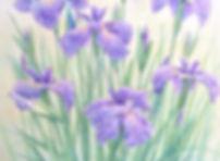 水無月のころ(菖蒲)部分、水彩画