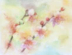 花匂ふ(梅)水彩画