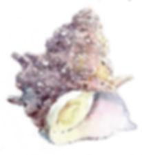サザエ (塩とマスキング液を使って)水彩画