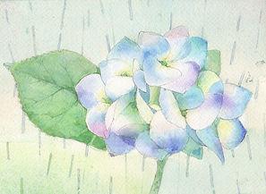 五月雨(紫陽花)水彩画 福井良佑 作
