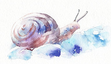 カタツムリ(水彩画)