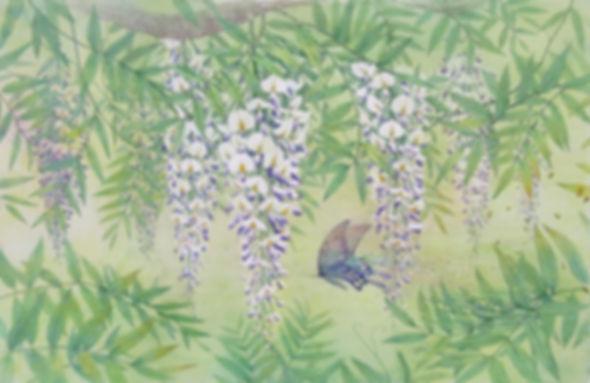 水彩画、藤花図・微風(藤花と蝶)