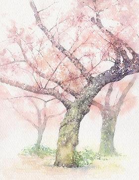 薫風(桜) 水彩画