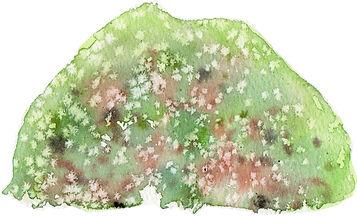 苔むす岩2(塩を使って)水彩画