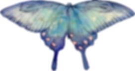 蝶(水彩画)