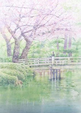 兼六園 雅桜(水彩画)福井良佑