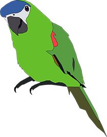 parrot-312291_640.png