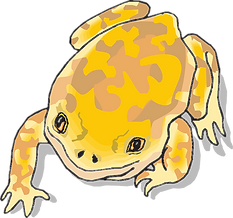 frog-46393_640_edited.png