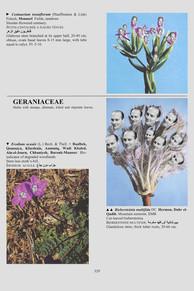 0329_Chirac_Mitt_Guscard.jpg