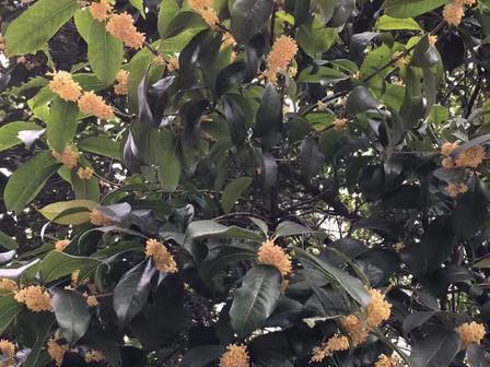 The Wonderful Smell of Rain
