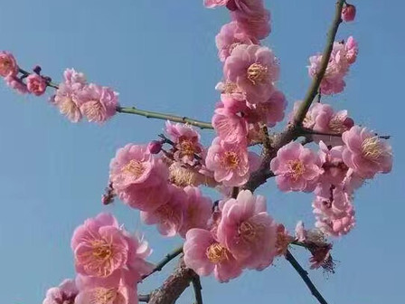Flowers Everywhere! Spring is Coming to Guilin