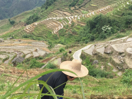 A Stunning View from the Top of the Longji Rice Terrace