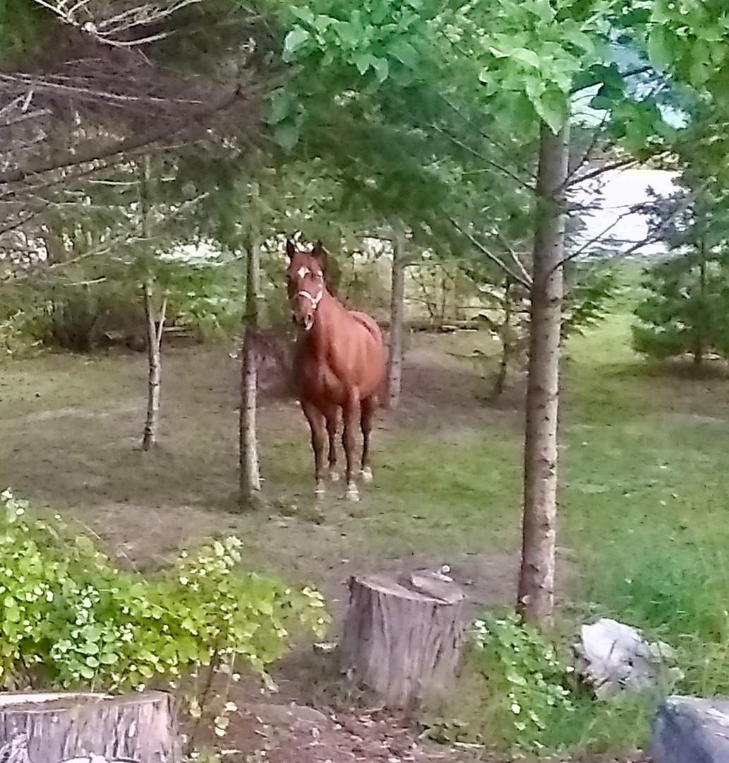 Horses love staying at Serenity RV Park