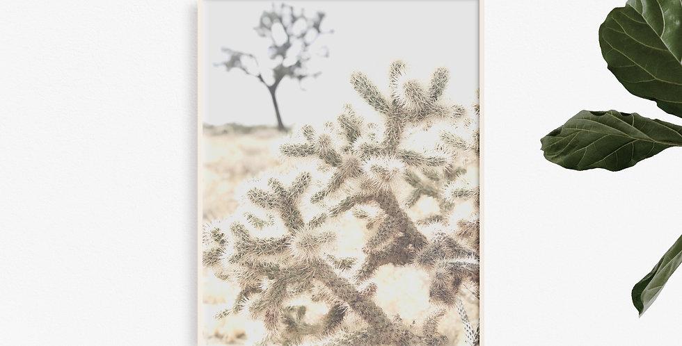 Desert Beauty #2