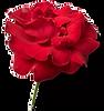 Blume b rot.png