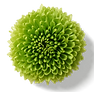 Blume b grün.png