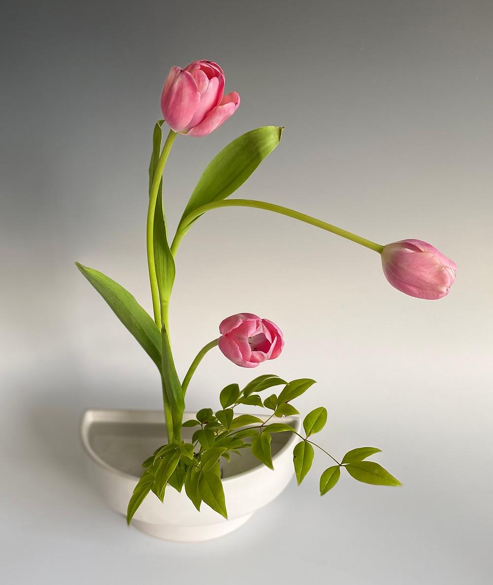 Japanese ikebana, tulips and nandina, half-moon vase.